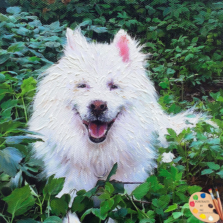 Samoyed Dog Portrait 467