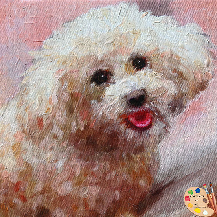 Schnoodle Dog Portrait 522