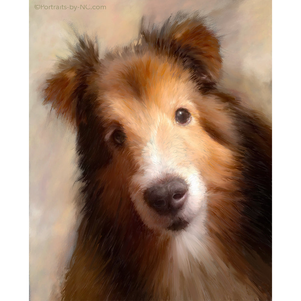 Custom Sheltie Dog Portrait 682