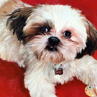 Shih Tzu Pet Portrait 402