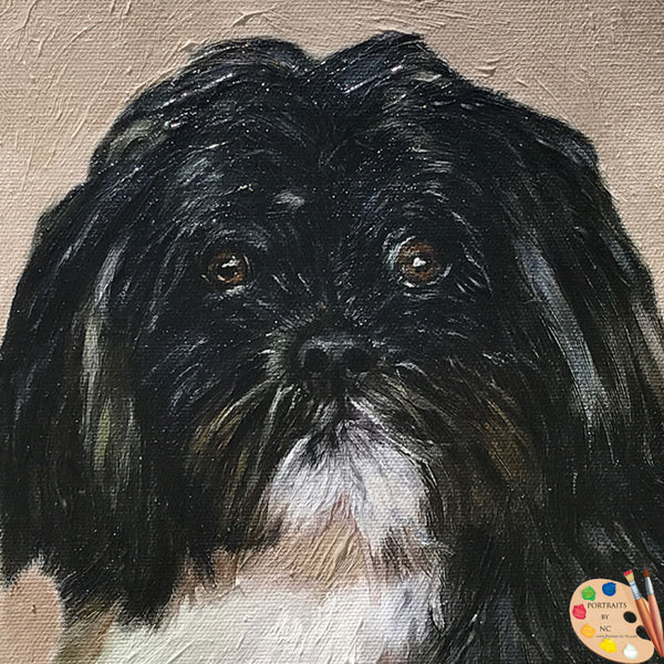 Shih-tzu-oil-portrait