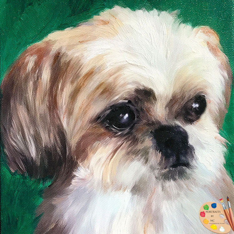 Shih Tzu Dog Portrait 504