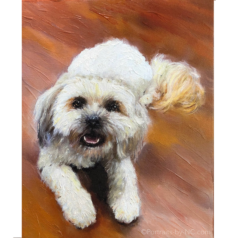 White Shih Tzu Dog Portrait