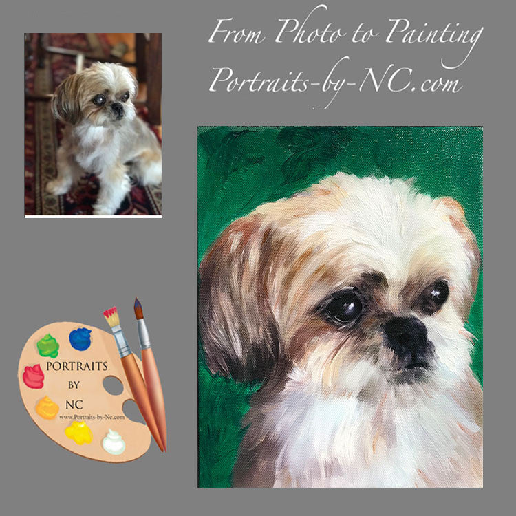Shih Tzu Dog Portrait from Photo 504