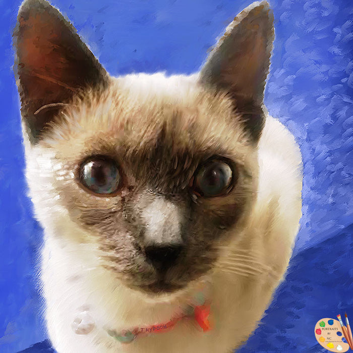 Siamese Cat Portrait 366