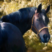 Tennessee Walker Horse Portrait