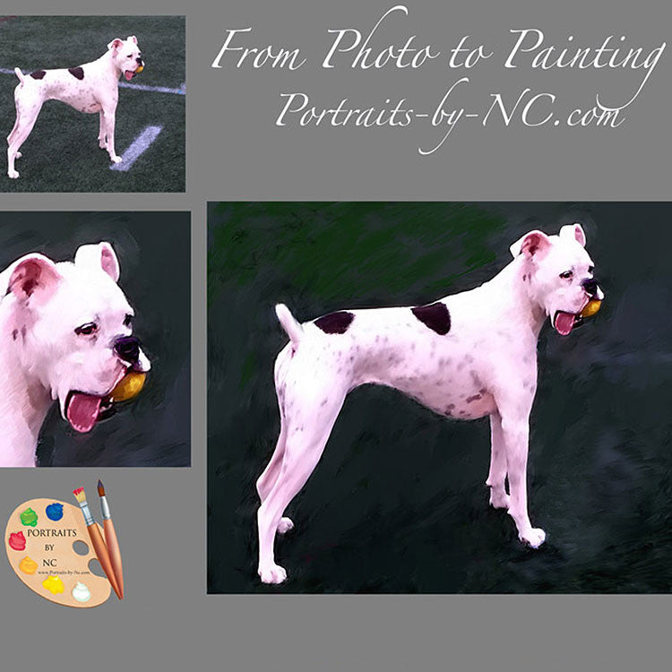 White Boxer Dog Portrait from Photo 394