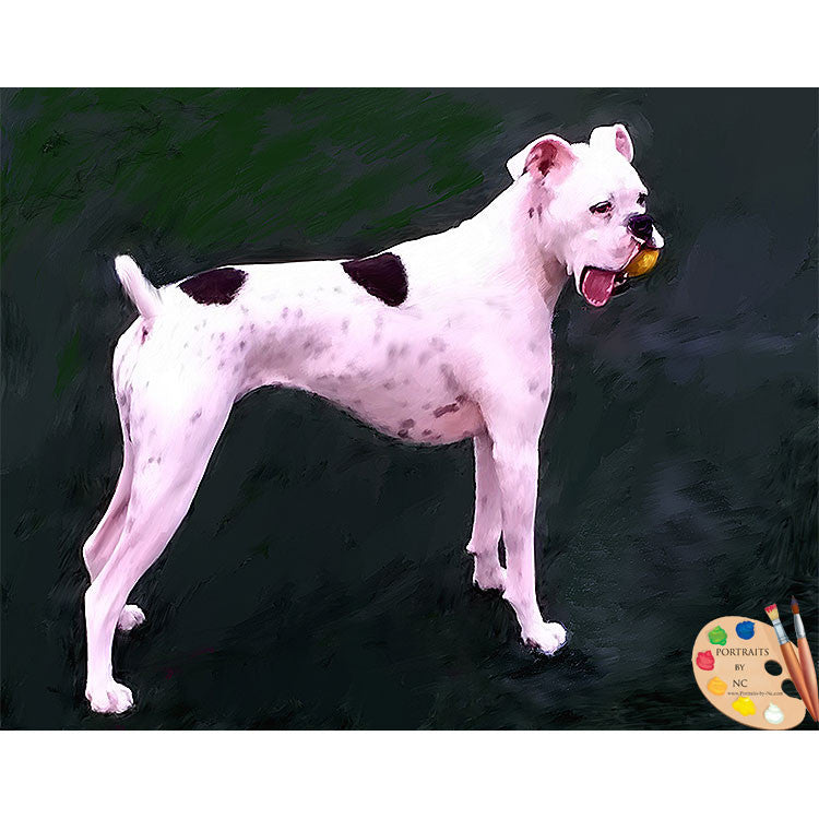 White Boxer Dog Portrait 394