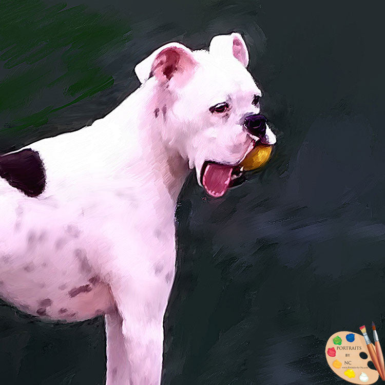 White Boxer Pet Portrait 394