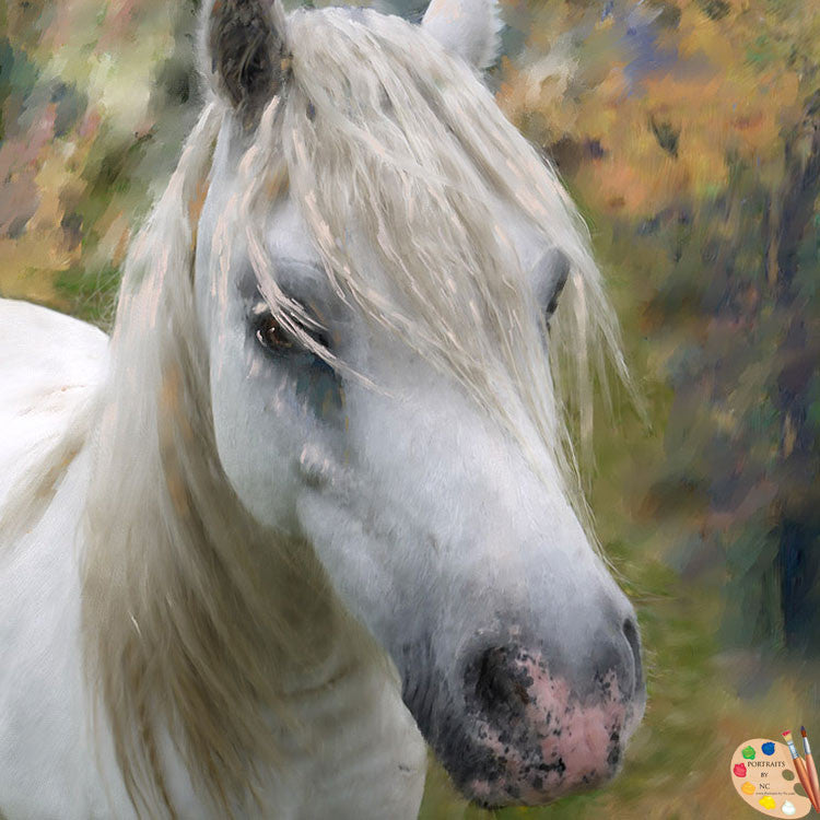 White Horse Portrait 364