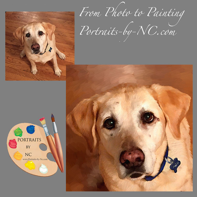 Yellow Lab Portrait from Photo 457