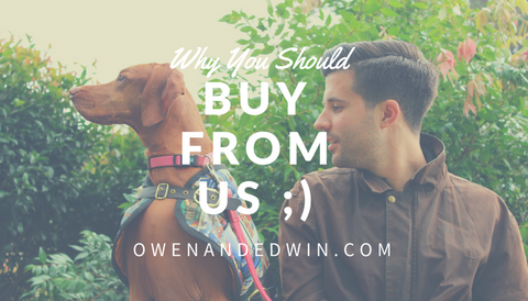 Owen & Edwin - Buy From Us - Vizsla Puppy - Weimaraner Adoption - Doberman Training - Love your Dog