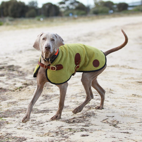 Captain Weimaraner - Owen & Edwin - London Blazer - Beach - Dog Jacket  - Dog Coat - Vizsla