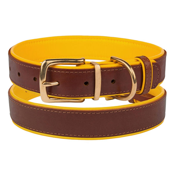 The Torquay Dog Collar - Summer Yellow - [Product_type] - Owen & Edwin - Dog Coat - Dog Jacket - Pointer - Vizsla - German Shorthaired Pointer - Weimaraner - luxury