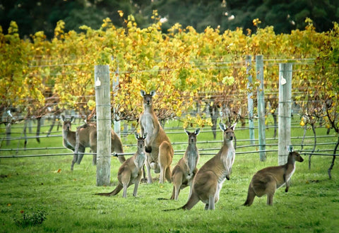 An Aussie Wine Adventure Corporate Tasting Event School of Wine Perth Western Australia