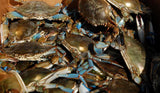 Live Blue Crabs by the DOZEN