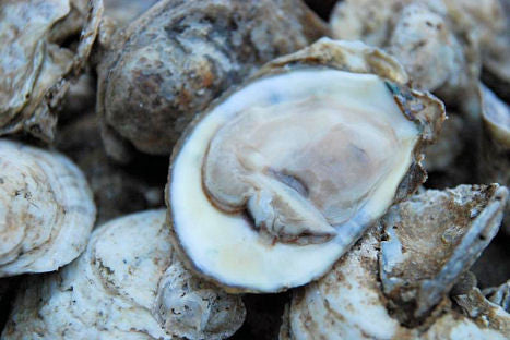 (1 Pint) East Coast Shucked Oysters- (16 oz)