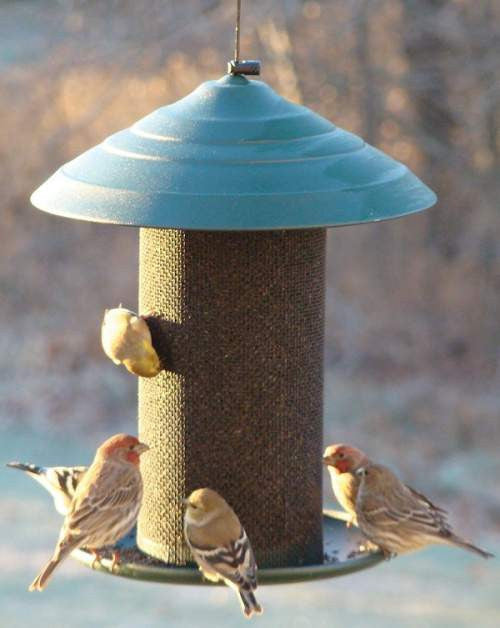 Finch / Tube Feeders