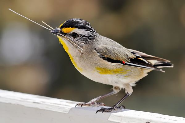 Backyard Landscaping Tips (Create A Bird Friendly Environment):