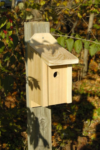 Heartwood 134A Wren Joy Box at www.wildbirdstoreonline.com