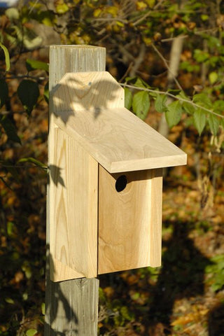 Heartwood 136A Western Bluebird Joy Box