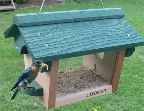 Looker Bluebird Feeder at www.wildbirdstoreonline.com