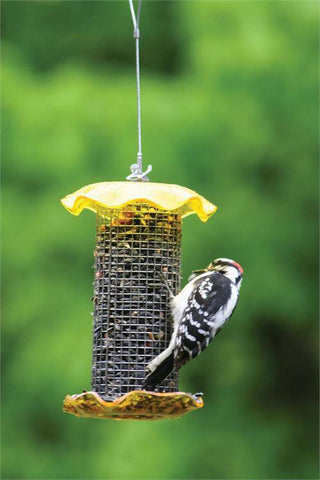 Birds Choice #FF106 1 Quart Forever Feeders