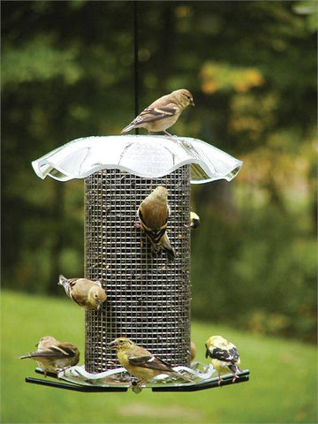 Birds Choice #FF202 3 Quart Forever Feeders