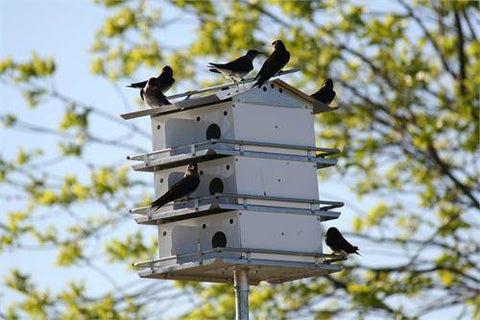 Trendsetter Purple Martin House  Room