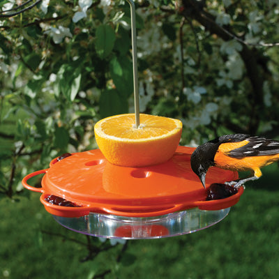 Woodlink 3-in1 Oriole Feeder Dish