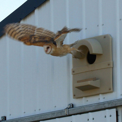 Barn Owl Box-Barn Mount