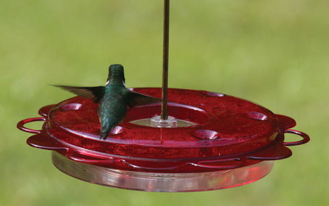 Birds Choice Hummerfest Feeder 12oz.