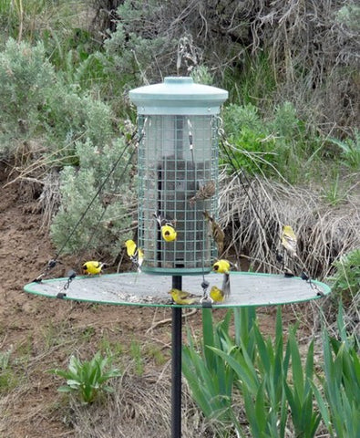 The Seed Hoop - Seed Catcher - Platform Bird Feeder