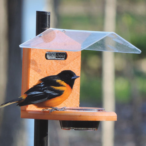 Birds Choice Recycled Pole Mount Oriole Feeder