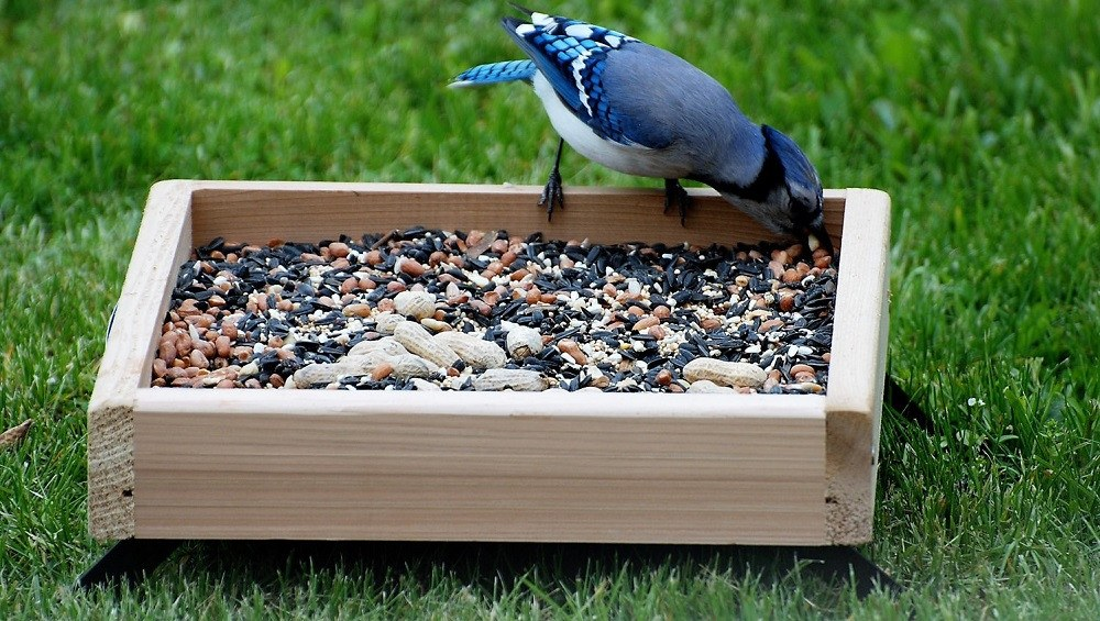 Platform Bird Feeders