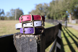 "1/2"" Waterproof Dog Collar"