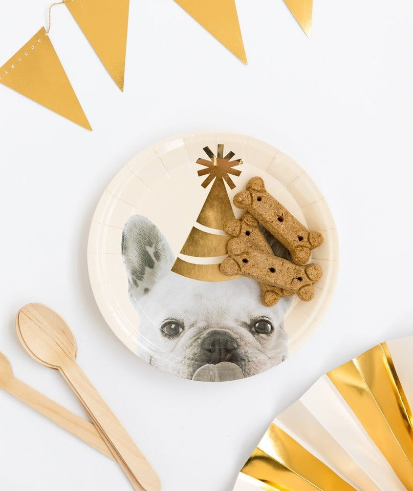 party hat dog plate