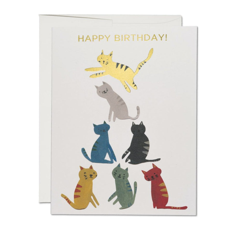 kitten cat birthday card