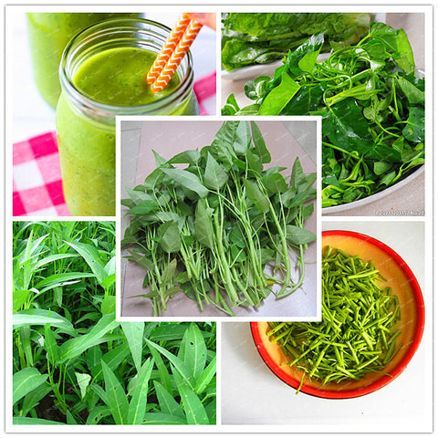 1 original package 200 PCS/ag Big leaf delicious seeds,Water spinach seed Rich Nutrition green vegetables heat-resisting