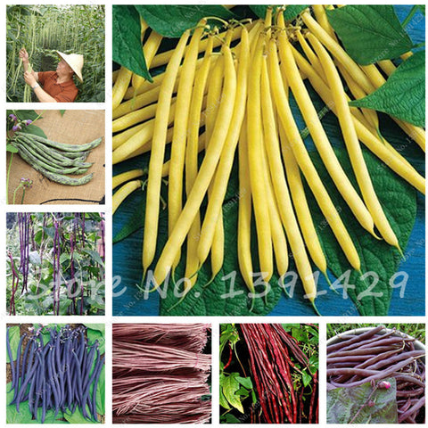 10 pcs/bag Multi Color Bean Seeds Long Bean Seeds, Healthy Vegetable Seeds,Natural growth For Home Garden