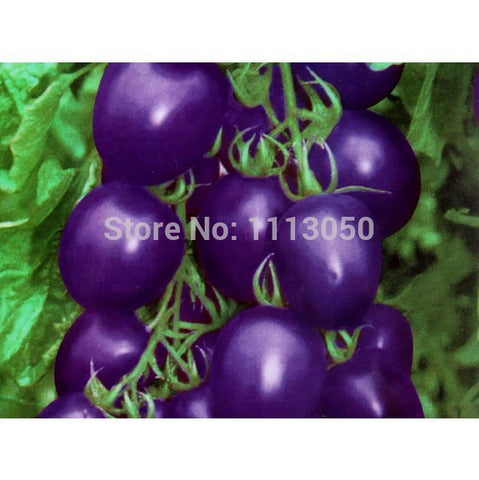 100pcs Tomato Seed Purple Tomato Vegetable Fruit Lycopersicon Esculentum Bonsai plants Seeds for home & garden