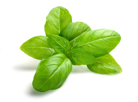 The Magic of Essential Oils: Basil – House of Intuition