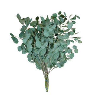Eucalyptus Essential Oil Magical Properties