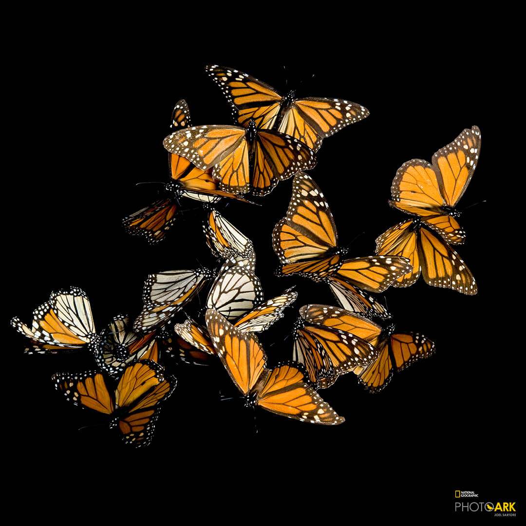 Picture of a butterfly with National Geographic logo in the bottom right.