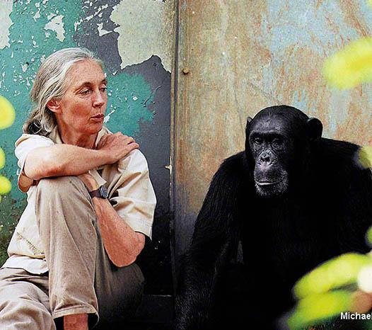 The Jane Goodall Institute Mood Board Image 1
