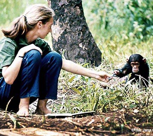 The Jane Goodall Institute Mood Board Image 3