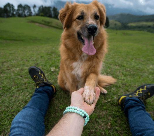Male wearing mint silicone beaded bracelet on wrist while holding dogs paw.