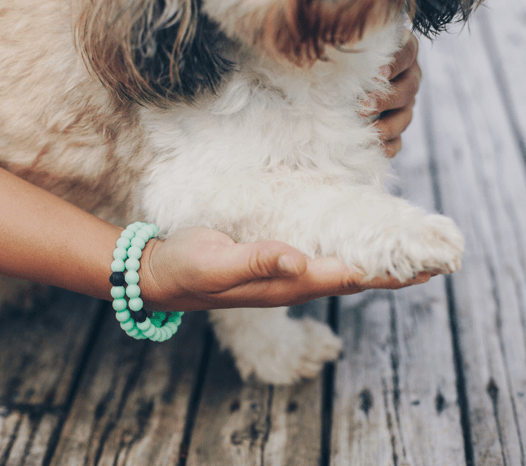 Close up of female wearing two mint silicone beaded bracelets on wrist while holding small white dogs paw.