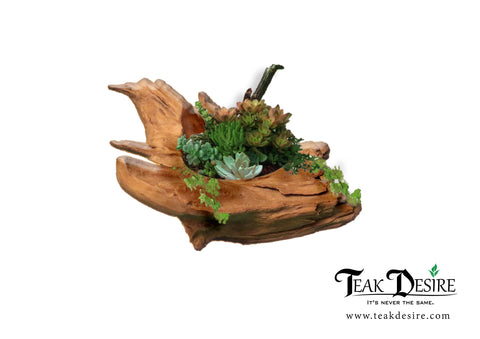 Meteor Bowl - Teak Root Natural Shape Wood Bowl for Home/ Garden/ Office/ Plant/ Ornament Display - Teak Desire
