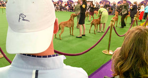 The 143rd Westminster Dog Show